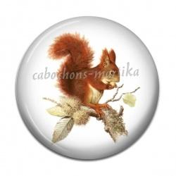 Cabochon Résine - écureuil