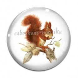 Cabochon Verre - écureuil