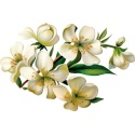 Fleurs / Plantes / Arbres